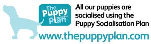 The Puppy Plan