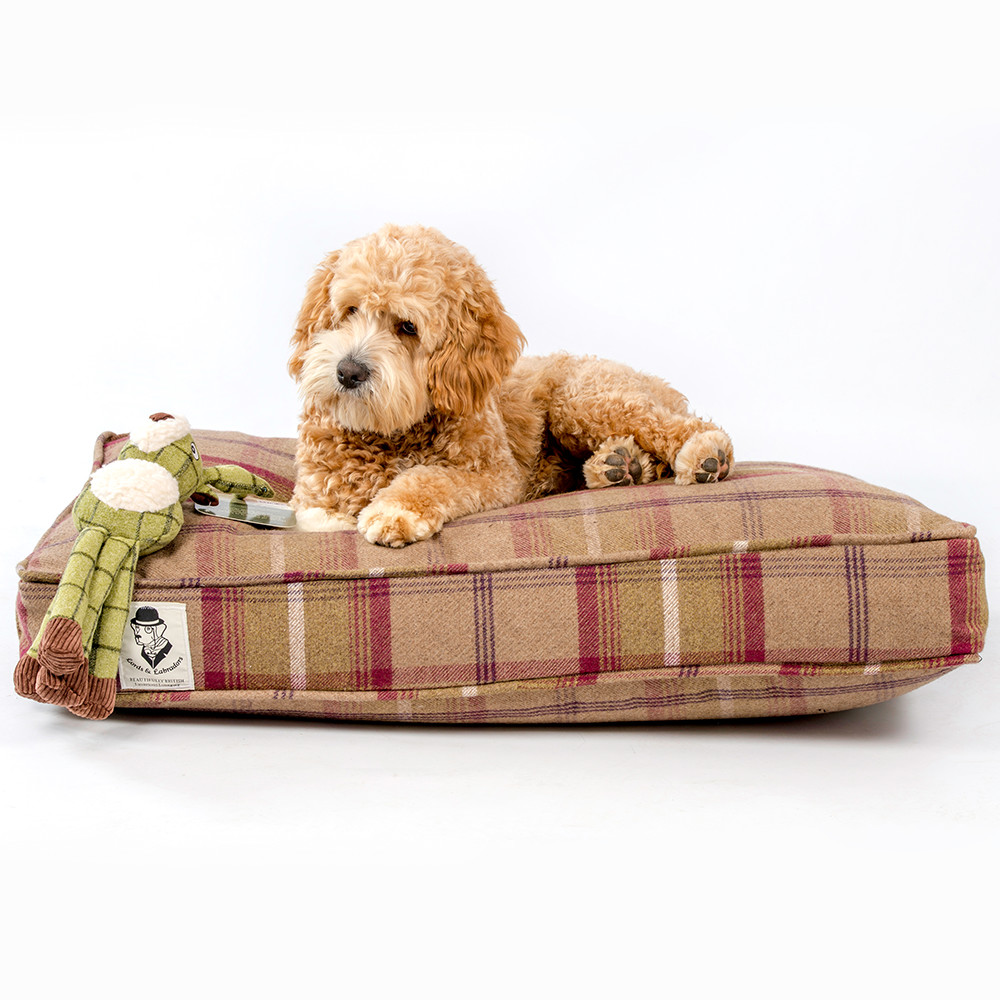 cockapoo on a tweed cushion